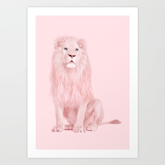 albino-lion-prints