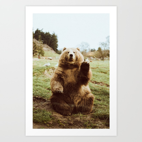 hi-bear-nt9-prints